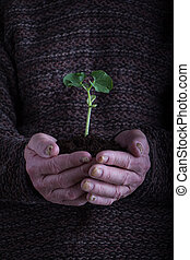 An old man hands holding a green young plant over dark sweater. Symbol of spring and environment concept.