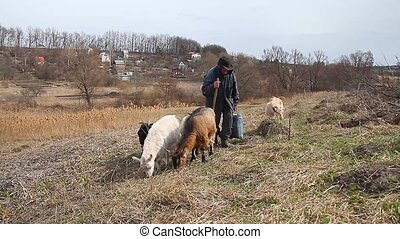 An old man in messy clothes comes from the pasture to his...