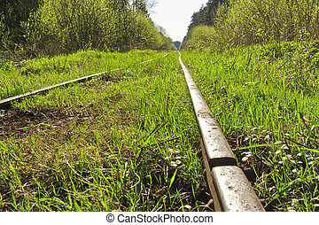 An old railway in the woods