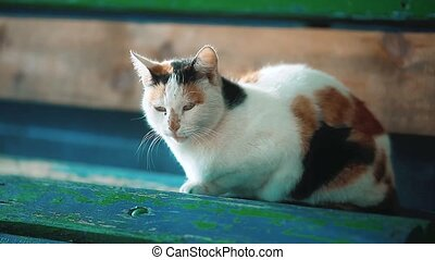 an old stray tricolor cat sits on a bench. the problem of...
