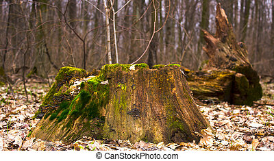An old stump covered with moss in the woods