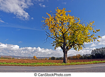 An old tree with yellow leaves, standing by the road.