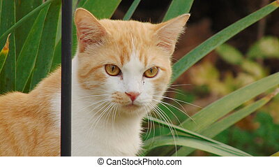 An orange and white kitty outside
