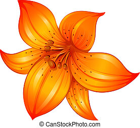 An orange lily flower - Illustration of an orange lily...