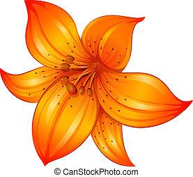 An orange lily flower - Illustration of an orange lily...