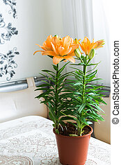 An orange lily in interior of room