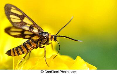 An Orange Moth