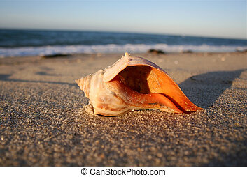 A conch rests in the sands at Nantucket, Massachusetts near the Atlantic ocean.