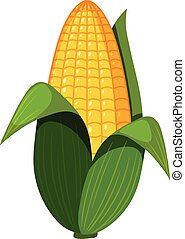 An Organic Corn on White Background