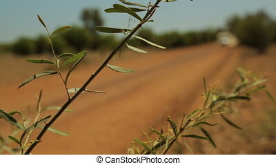 An outback bush with a white caravan driving past