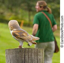 An owl in captivity