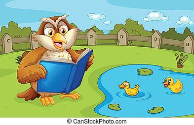 An owl reading near the pond