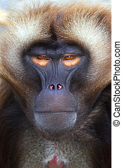 An portrait of a nice ape with orange eyes