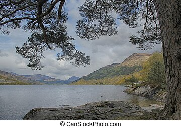 Loch Lomond - An tree clings to rocks at Loch Lomond