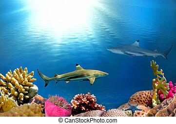 An underwater scene with sun rays