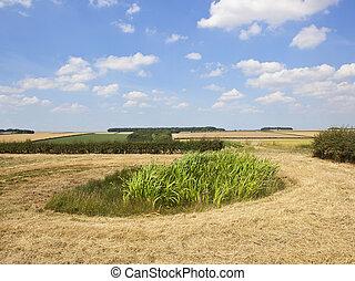 upland farm pond