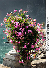 An urn filled with flowering geraniums on the shore of Lake Garda