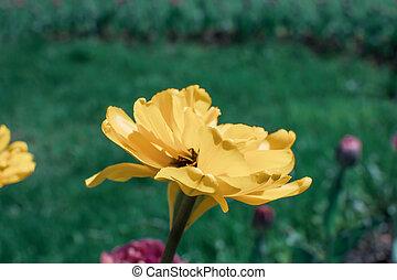 an yellow flower on green grass background