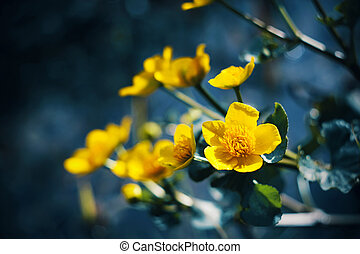 An yellow flower with green leaves grows in the dark swamp near the water, illuminated by sunlight. Summer.