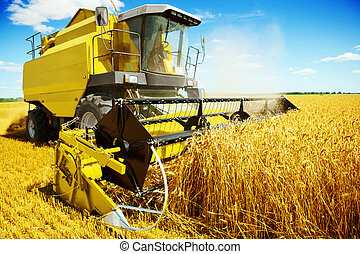 an yellow harvester in work