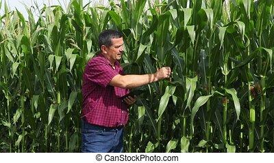 analyser, paysan, champ maïs