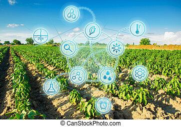 analysis., modernos, agriculture., seleção, ensolarado, innovations, trabalho, colheita, campo, verde, fresco, científico, greens., legumes, condição, cultivando., desenvolvimentos, prevendo, day.