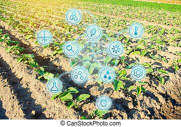 analysis., modernos, seleção, agriculture., ensolarado, innovations, trabalho, colheita, campo, beringela, verde, fresco, científico, greens., legumes, condição, cultivando., desenvolvimentos, prevendo, day.