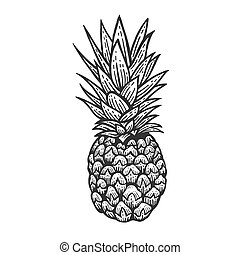 ananas, illustration., vecteur, fruit, croquis, image., ...