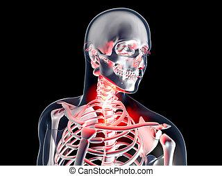 anatómia, torok, -, fájó