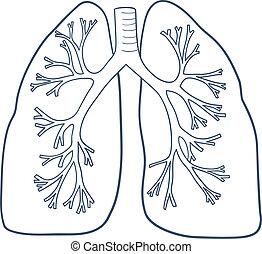 anatômico, branca, pulmões, isolado