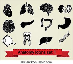 anatomía, 1, conjunto, iconos