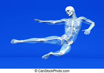 anatomía, artes marciales, -