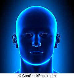 anatomía, cabeza, -, vista delantera, -, azul, co