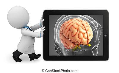 anatomía, cerebro, médico joven