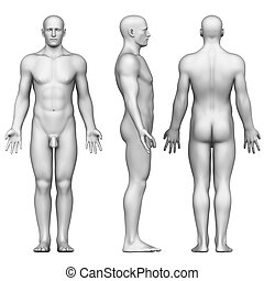 anatomía, cuerpo masculino