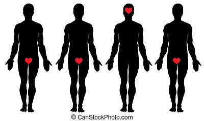 anatomía, de, amor