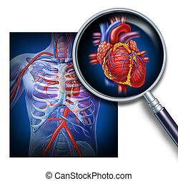 anatomía, de, el, corazón humano