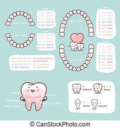 anatomía, diente, gráfico, humano, caricatura
