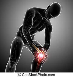 anatomía, gris, macho, dolor, rodilla