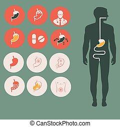 anatomía humana, estómago