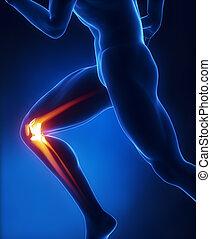 anatomía, rodilla, corriente, hombre