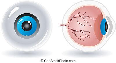 anatomía, vector, ojo, humano
