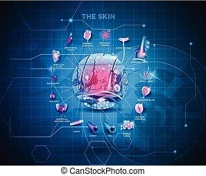 anatomi, bakgrund, skinn