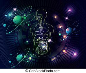 anatomi, färgrik, mänsklig, bakgrund