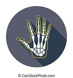 anatomi, hand