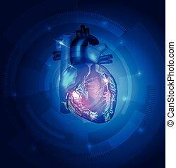 anatomi, hjärta