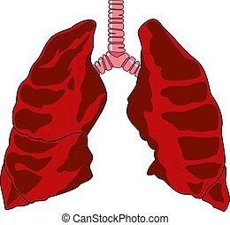 anatomi, inre, mänsklig, illustration, concept., lungan, vektor, formge grundämne, medicin, organs, ikon