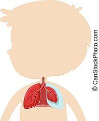 anatomi, lunga, mänsklig