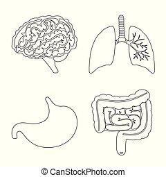 anatomi, medicinsk, organ, isolerat, objekt, kollektion, ...