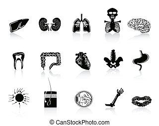 anatomi, svart, mänsklig, ikon